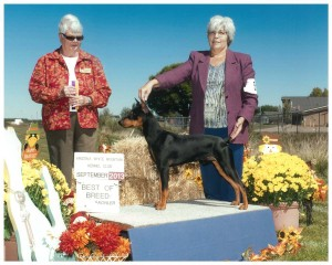 Wolfgang wins Best of Breed at the Arizona White Mountain Kennel Club 2013