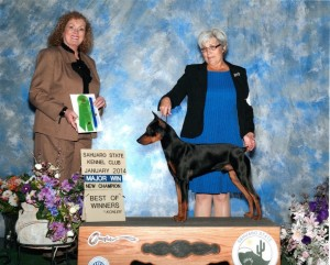 Wolfgang's Second Major Win - He's a new AKC Champion!