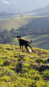 Lindee's Nitro gets to romp in some pretty nice surroundings. He's all natural, to suit his Northern California home.