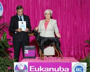 GCH Daveren's Wolfgang von Blitzen Wins Select Dog Award at the prestigious 2015 AKC/Eukanuba National Competition